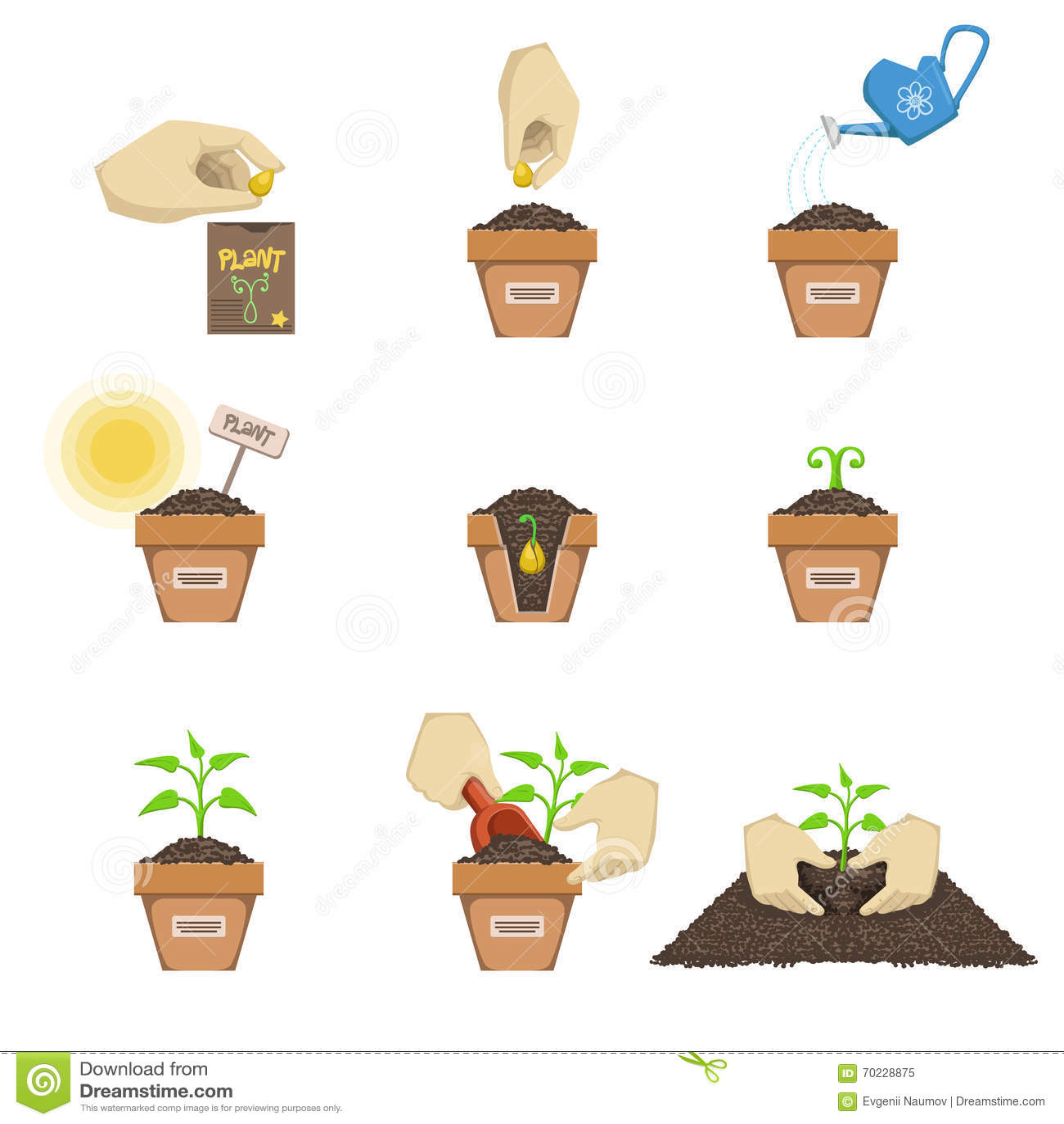 Pflanzen Der Samen Reihenfolge Vektor Abbildung