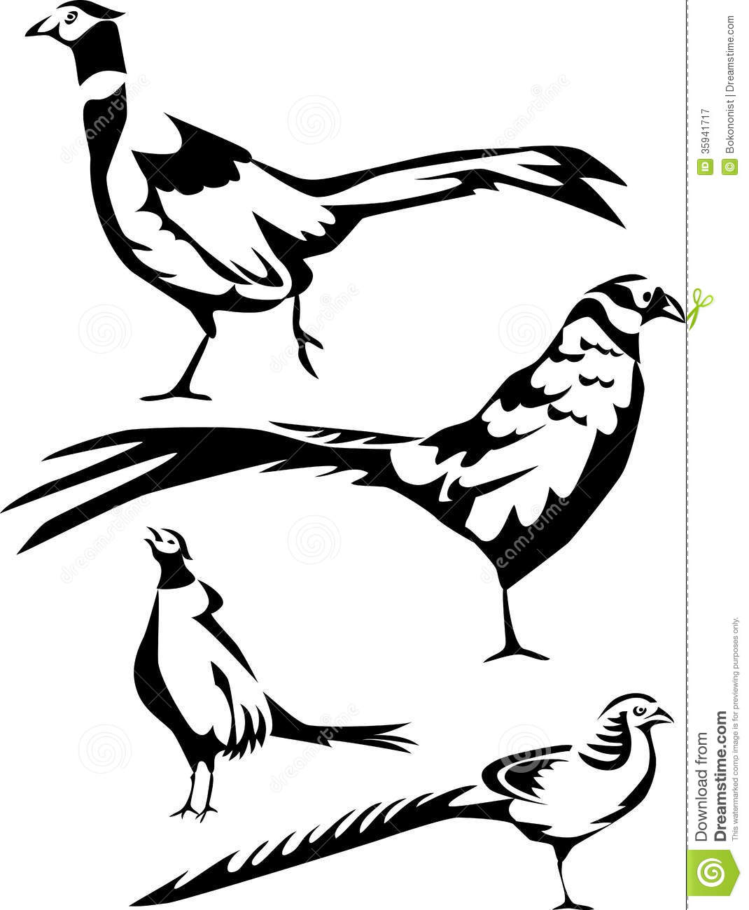 Pheasant Stock Vector Illustration Of Wild Colchicus