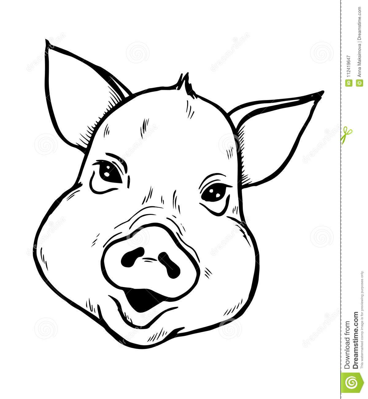 Pig Head Sketch Black And White Illustration Stock Vector
