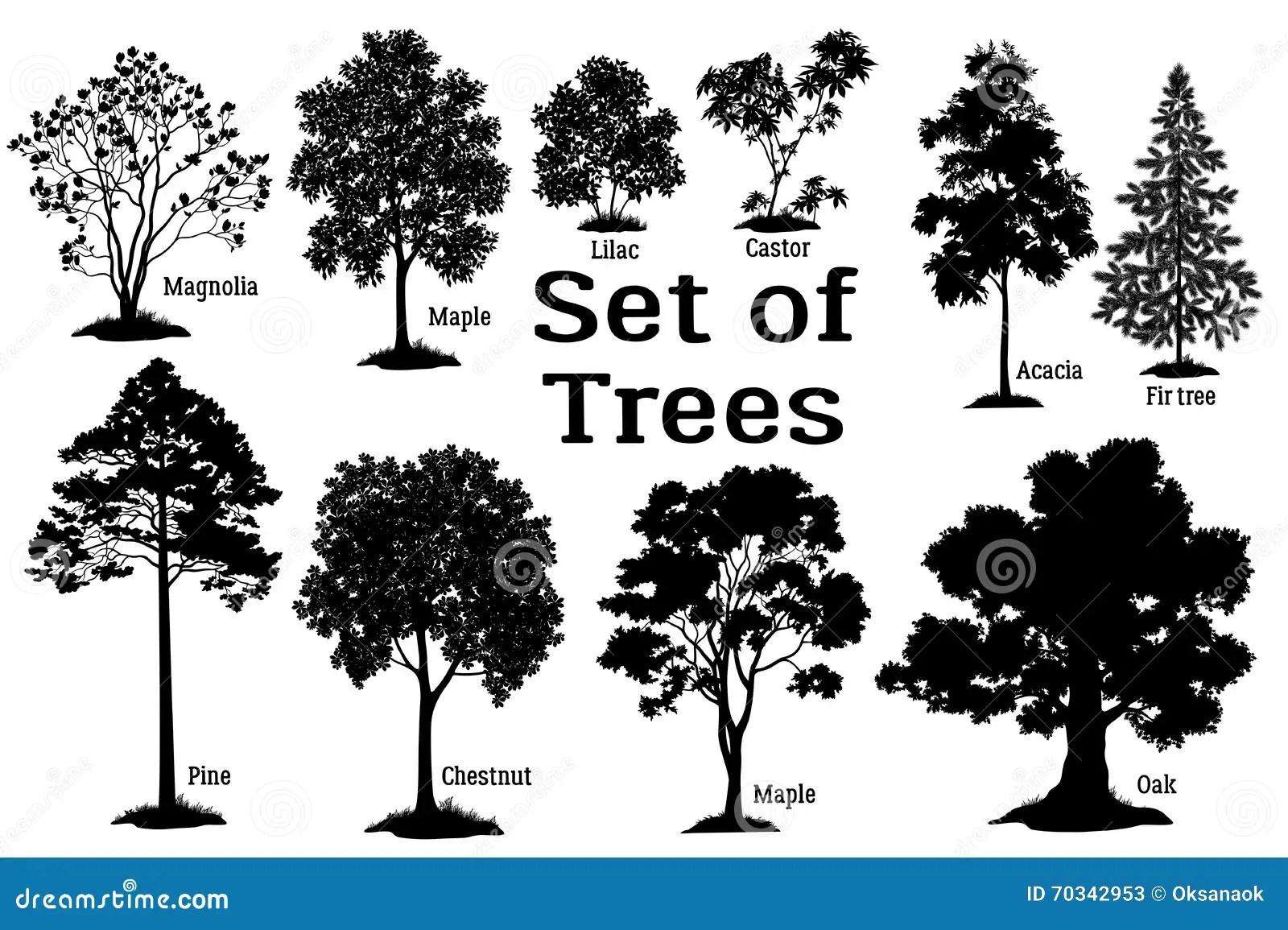 Pine Tree Black Silhouette Stock Vector Illustration Of
