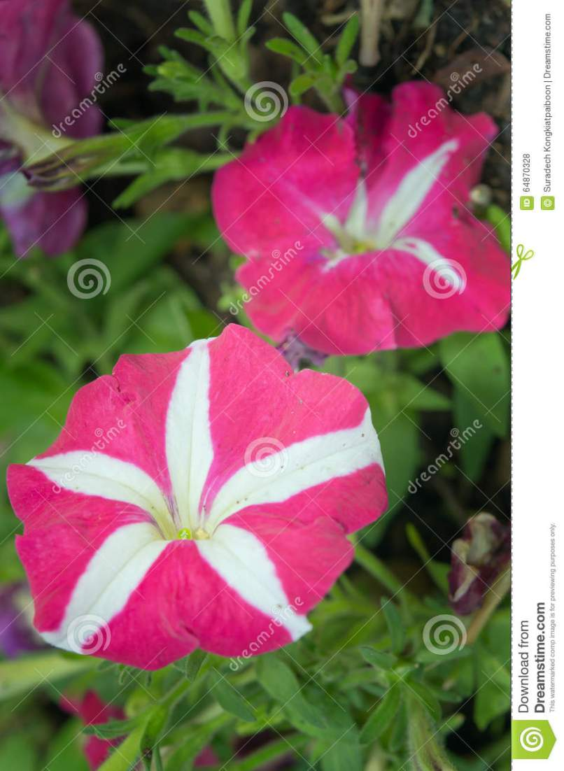 Pink And White Flowers Pictures Names Matatarantula