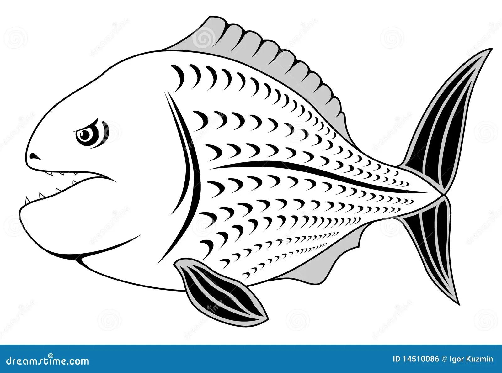 Piranha Royalty Free Stock Image