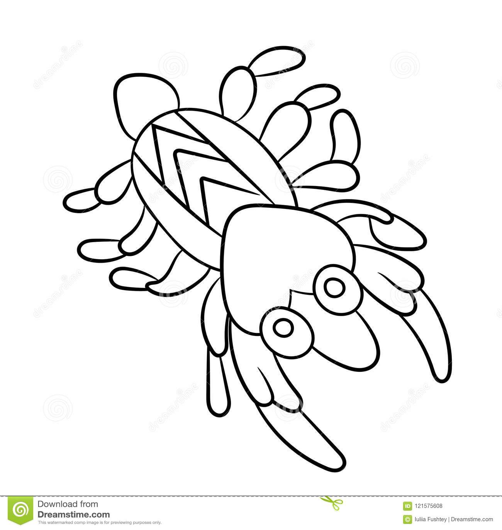 Shrimp Coloring Book Small Marine Cancroid Ocean