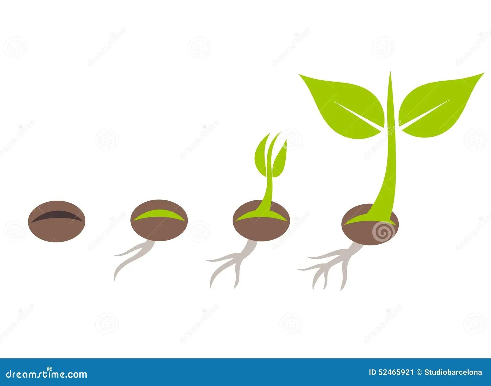 Plant Germination Stock Vector