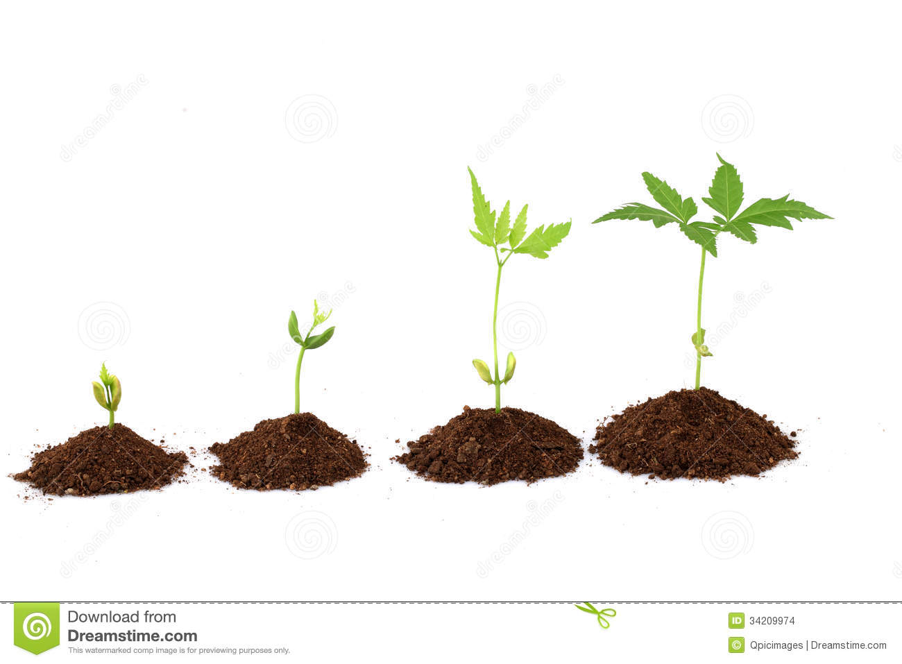 Plant Growth Stages Stock Images