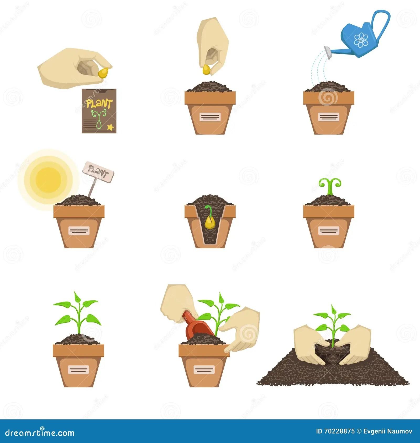Plantation De L Ordre De Graine Illustration De Vecteur