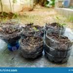 Plastic Bottles Recycled For Plant Pots Stock Image Image Of Care Conservation 170542233