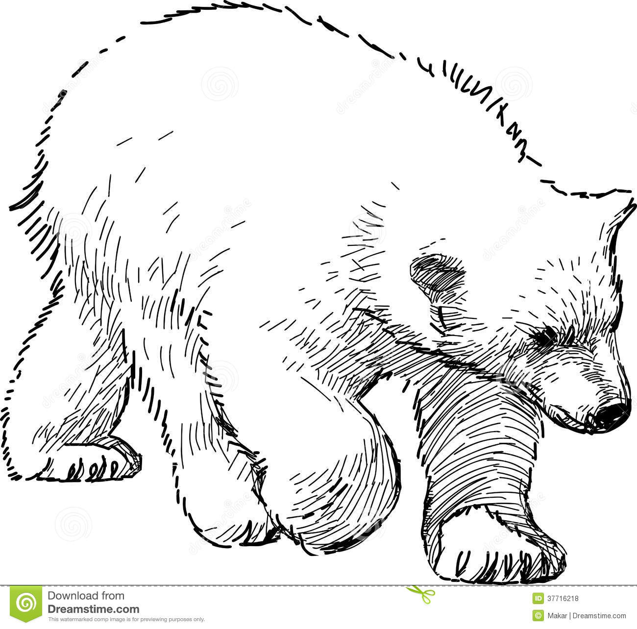 Polar Bear Cub Stock Vector Illustration Of Bear Wild