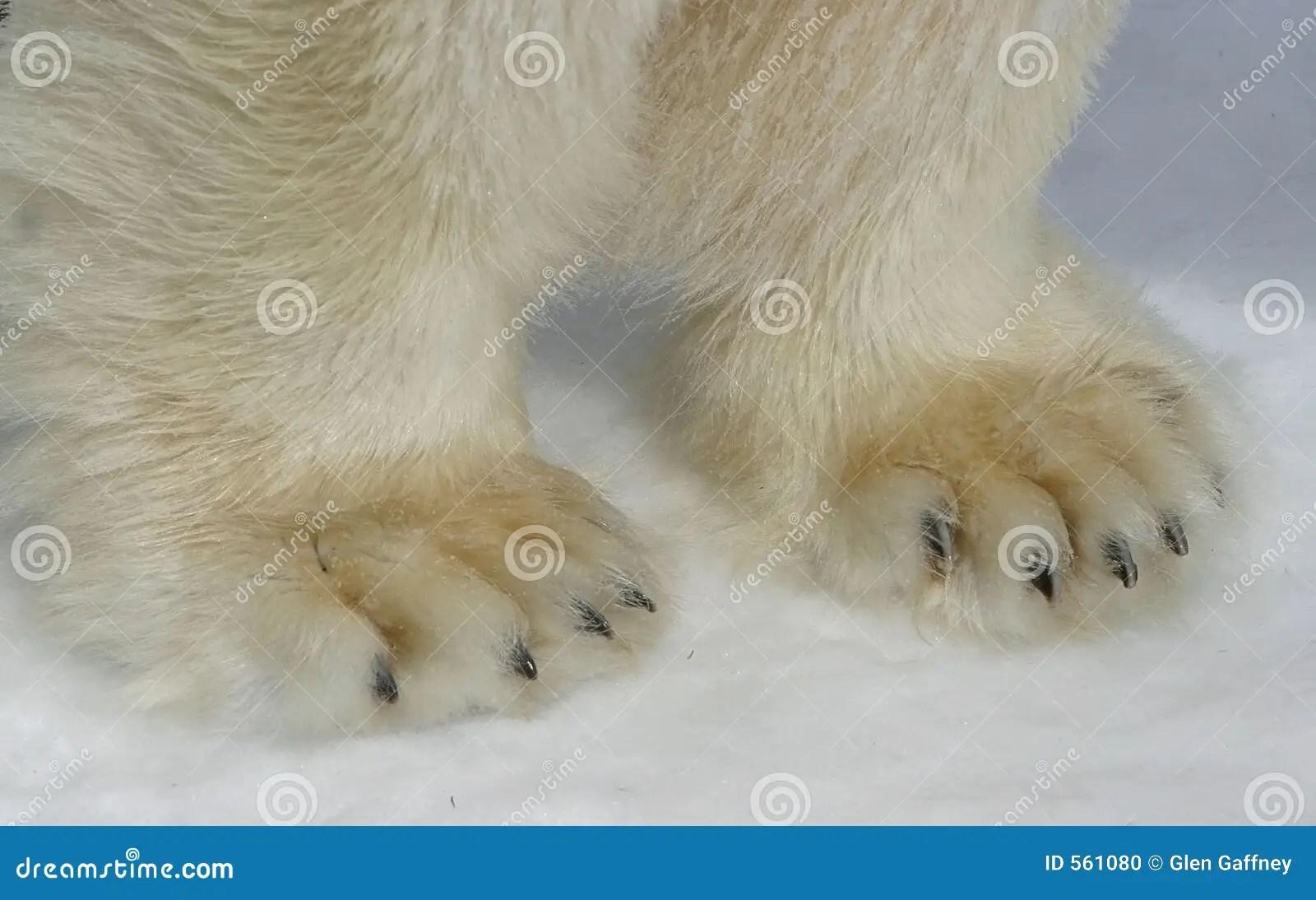 Polar Bear Paws Stock Photo Image Of Artic Bear Paws
