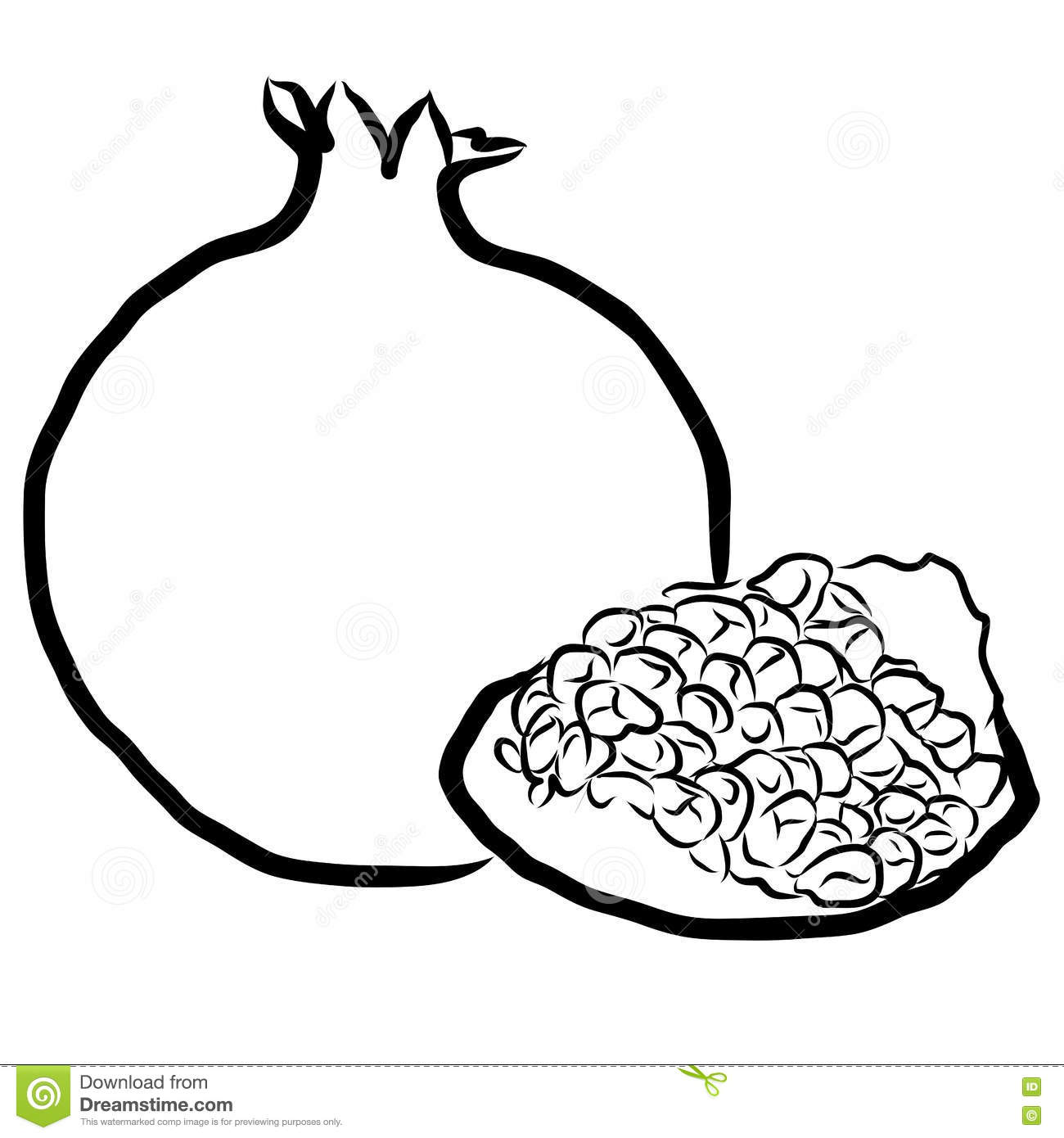 Pomegranate Sketched Outline Vector Illustration Stock