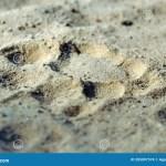 Jaguar Footprint Photos Free Royalty Free Stock Photos From Dreamstime