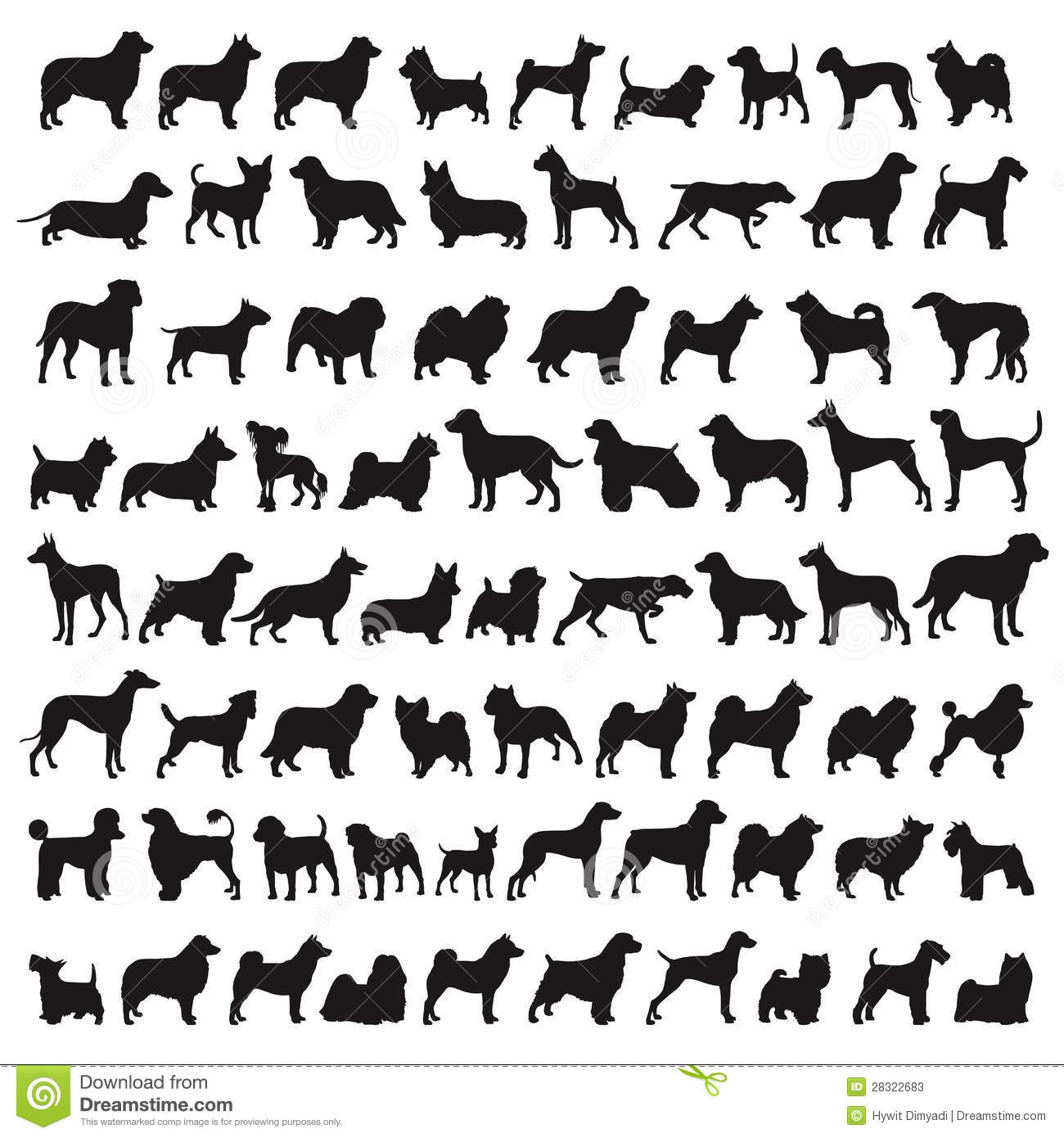 Popular Dog Breeds Stock Photos