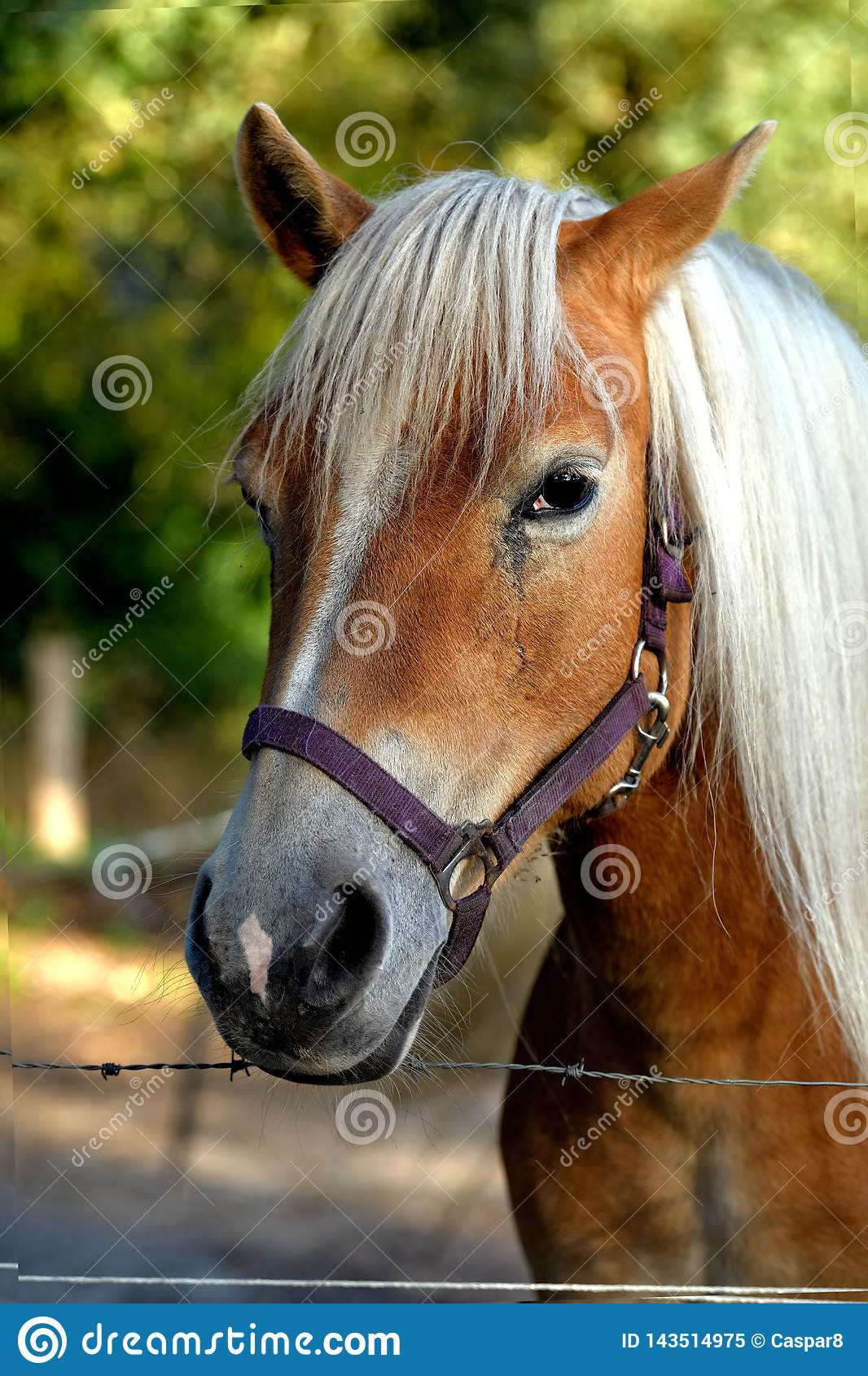 A Portrait Of A Friendly Light Brown Horse In An Enclosure