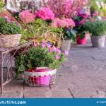 Pots With Blooming Pink Flowers For Sale Outside Of Flower Shop Garden Store Entrance Decorated With Rustic Style Forged Bench An Stock Image Image Of Decorative Bunch 139571315