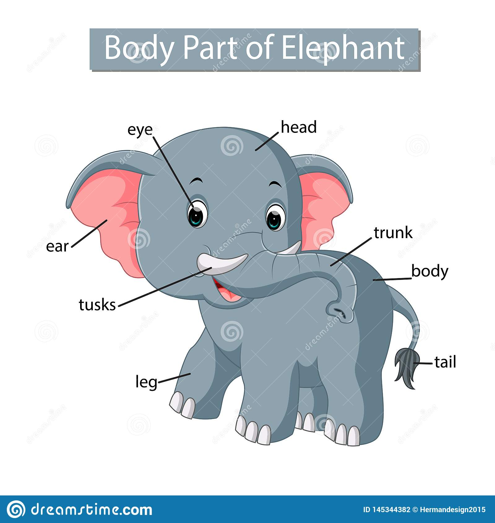 Diagram Showing Body Part Of Elephant Stock Vector