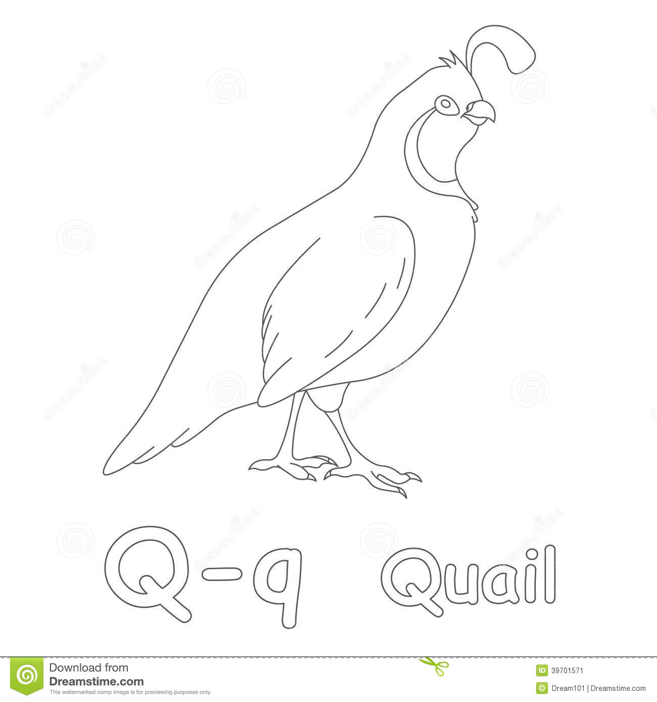 Q For Quail Coloring Page Stock Illustration