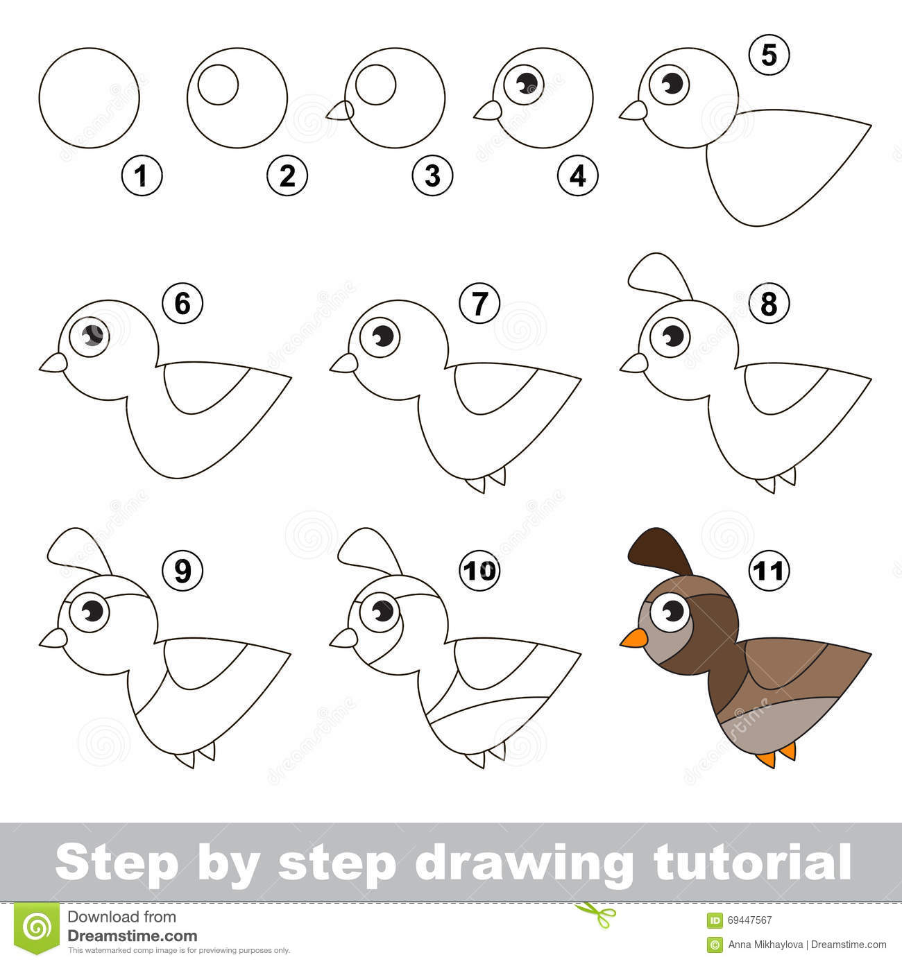 Quail Drawing Tutorial Stock Vector Image Of