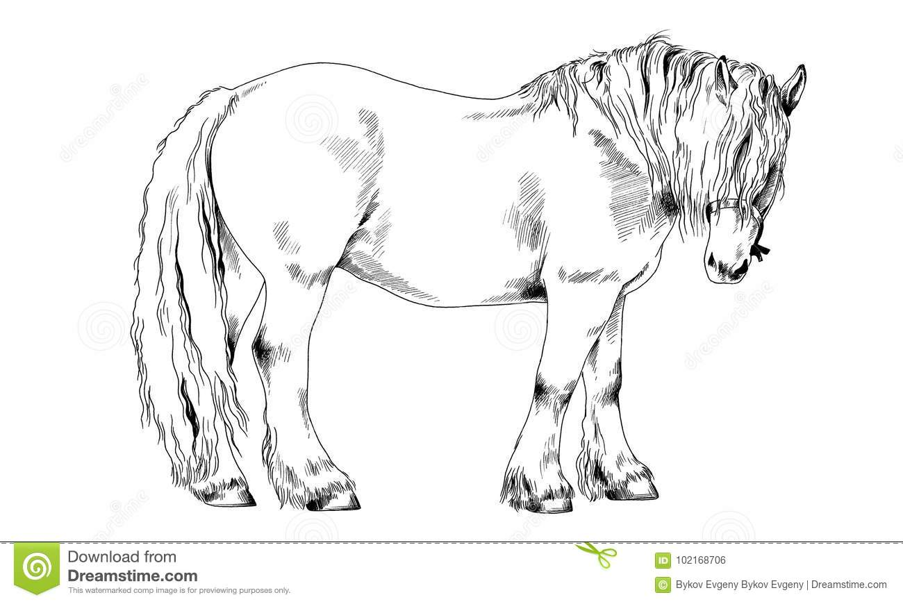 Race Horse Without A Harness Drawn In Ink By Hand Stock