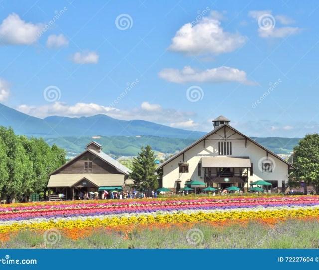 Rainbow Flower Field In Tomita Farm Hokkaido Japan