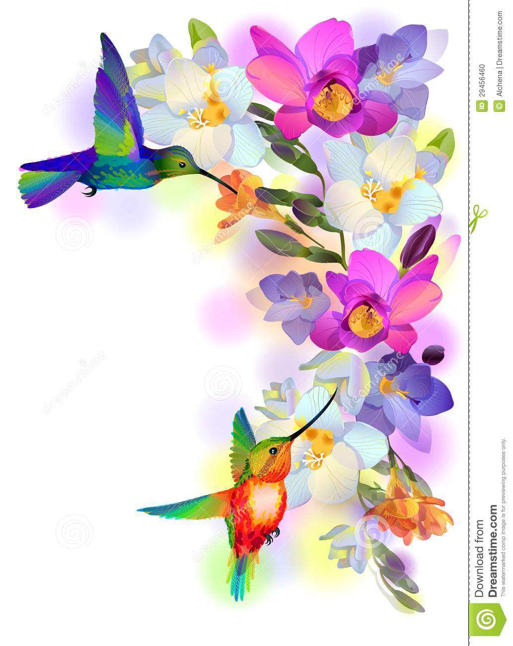 Rainbow Humming Bird With Violet Orchids Stock Photo Image 29456460
