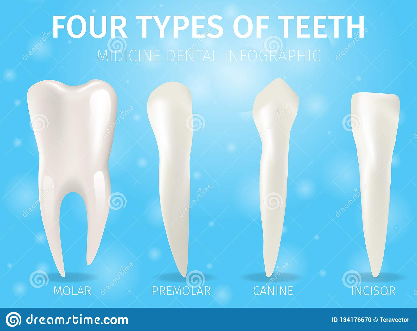 Realistic Banner Illustration Four Types Of Teeth Stock