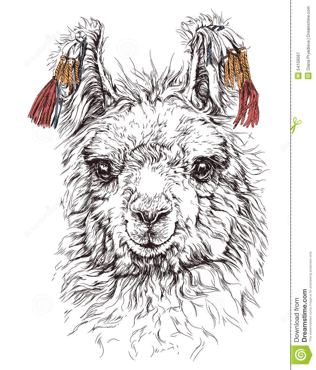 Realistic Sketch Of Lama Alpaca On White Stock Vector