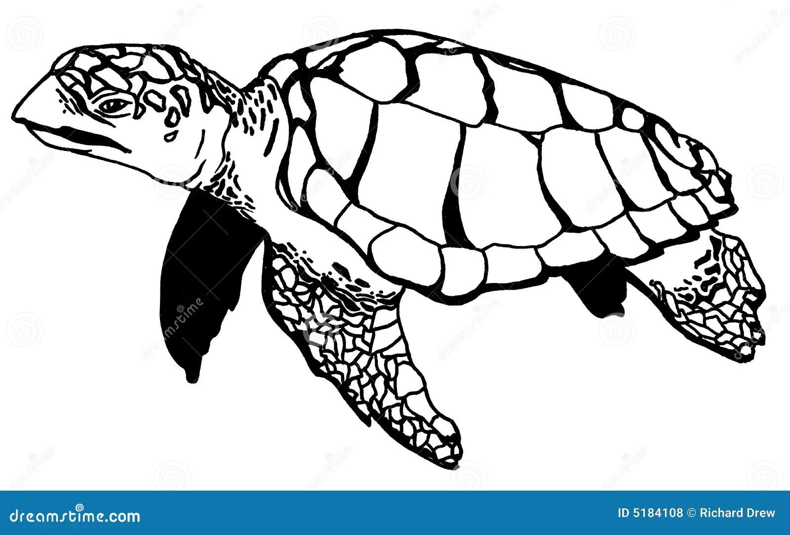 Realistic Turtle Illustraction Stock Illustration