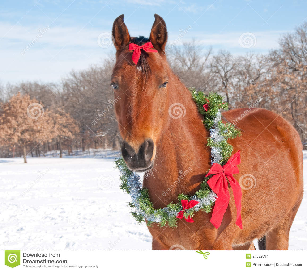 Red Bay Horse Wearing A Christmas Wreath Royalty Free