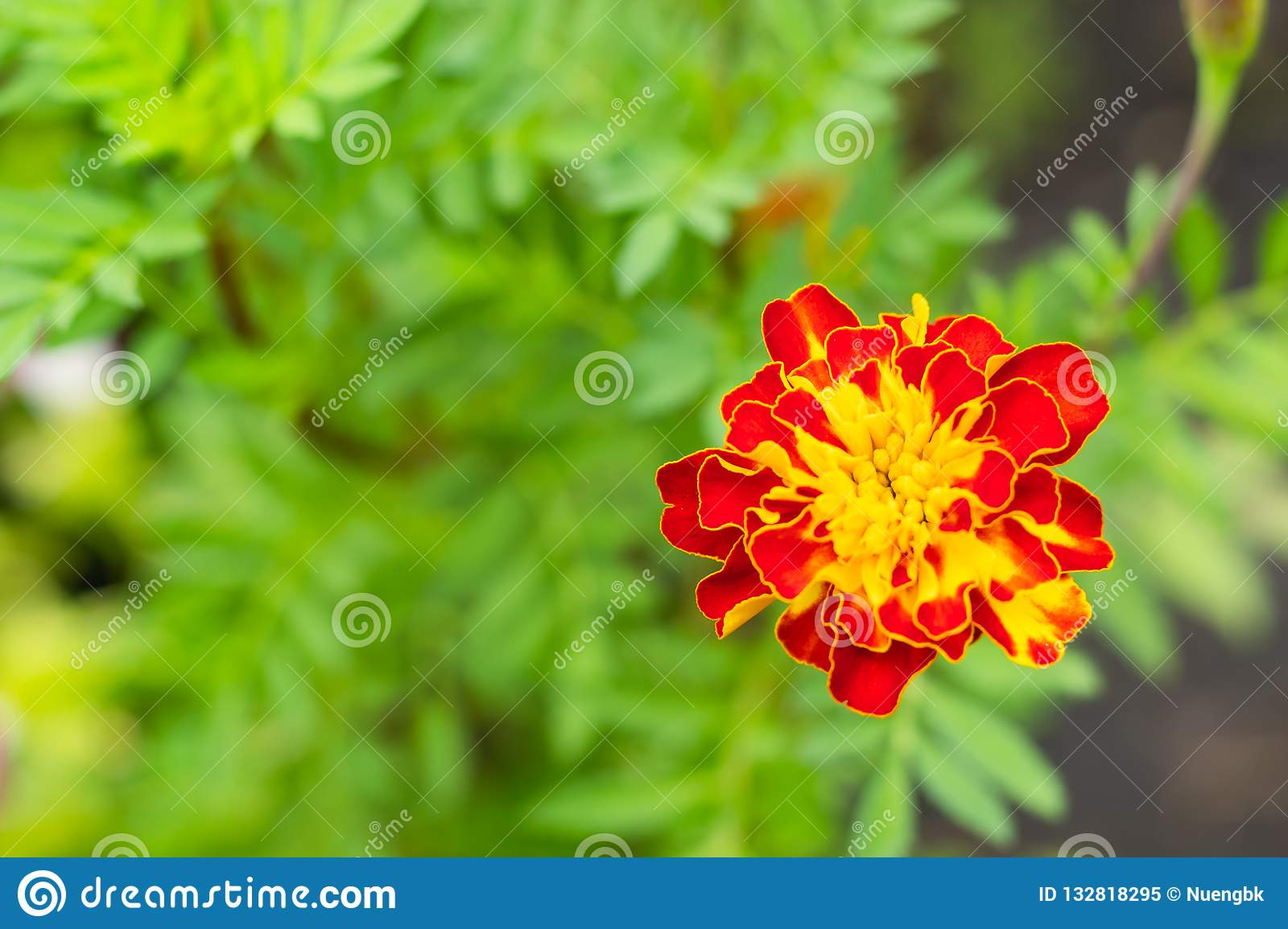 Red Flower Stamen Yellow On Green Leaf Background Stock