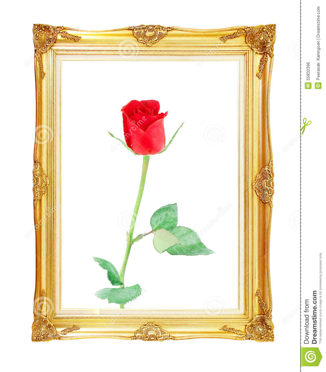 Red Rose On Golden Frame With Empty For Your Picture