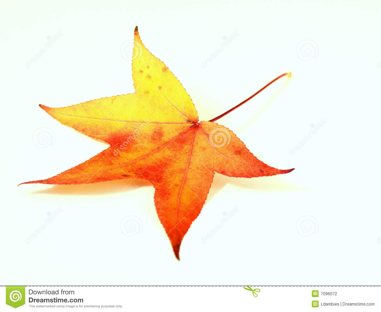 Red Yellow Autumn Leaf Stock Photo Image Of Leaf Leaves