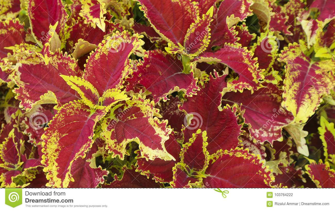 Red And Yellow Leaf Flower Plant Stock Photo