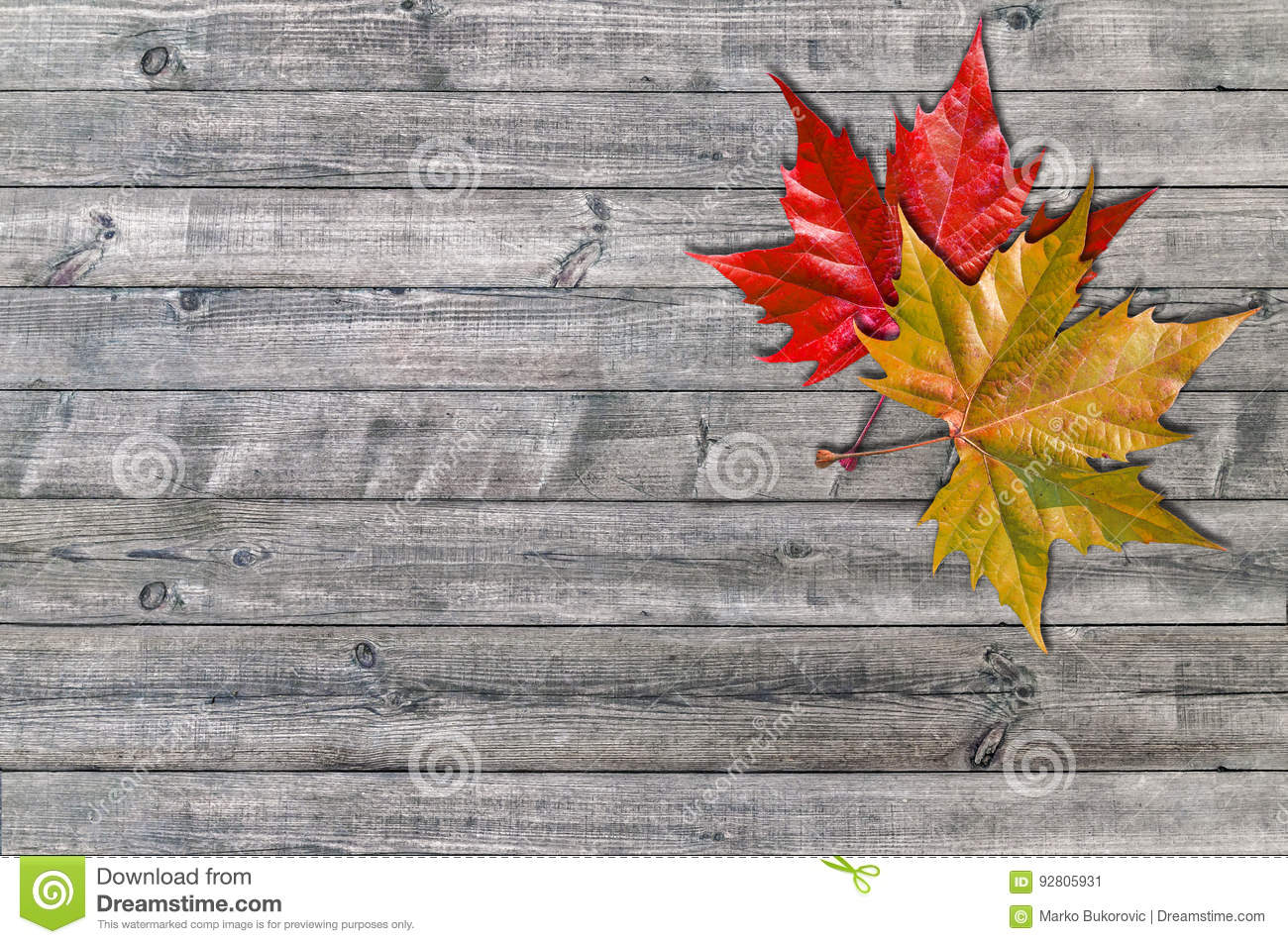Red And Yellow Leaf On Wooden Board Background Stock Image