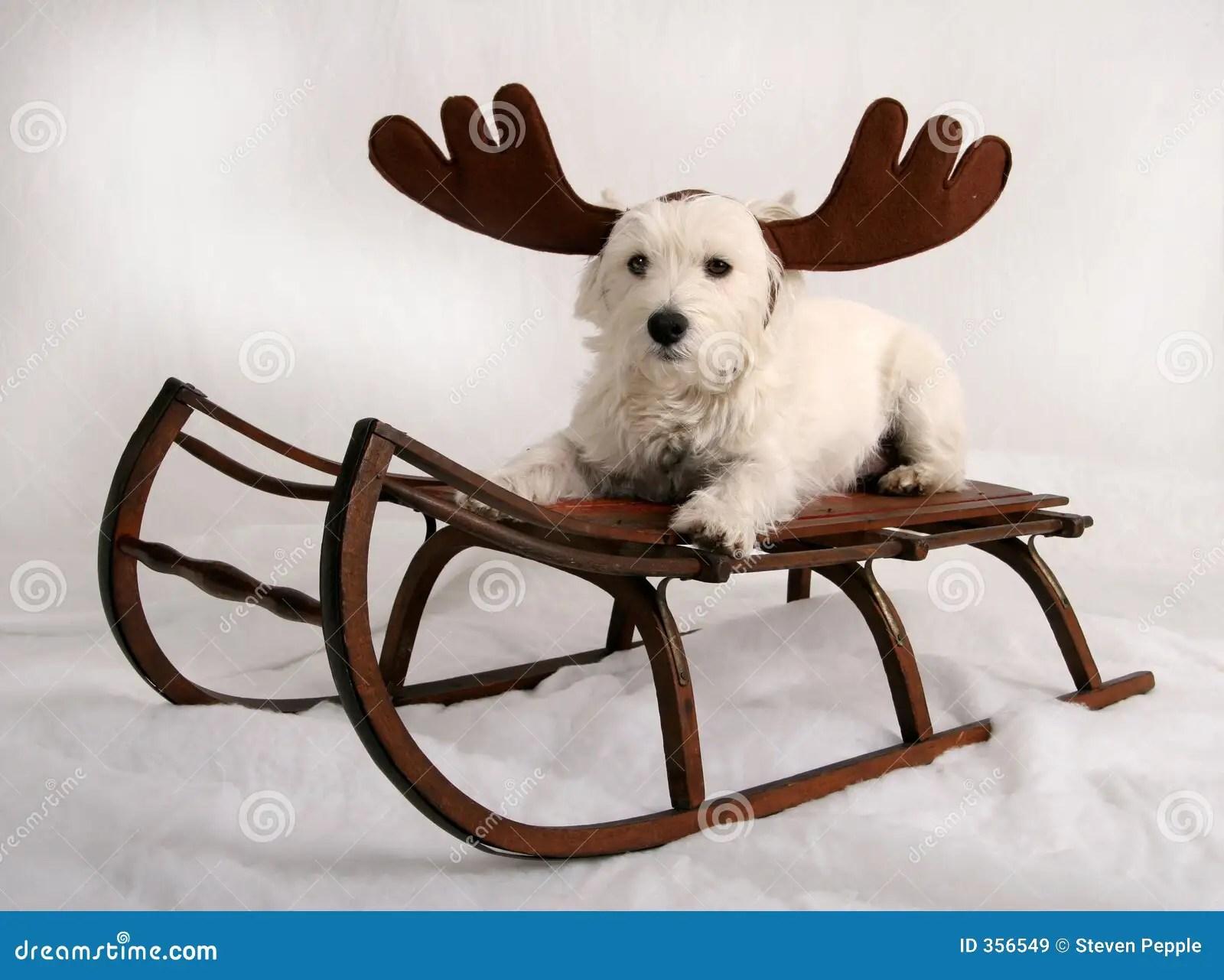Reindeer Dog Royalty Free Stock Images Image 356549