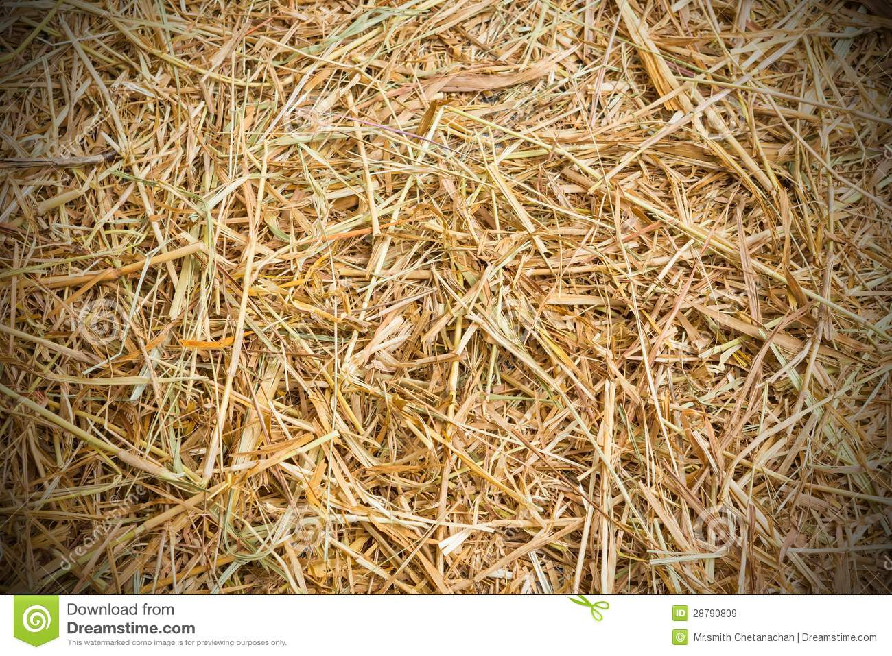 Rice Straw Background Royalty Free Stock Images