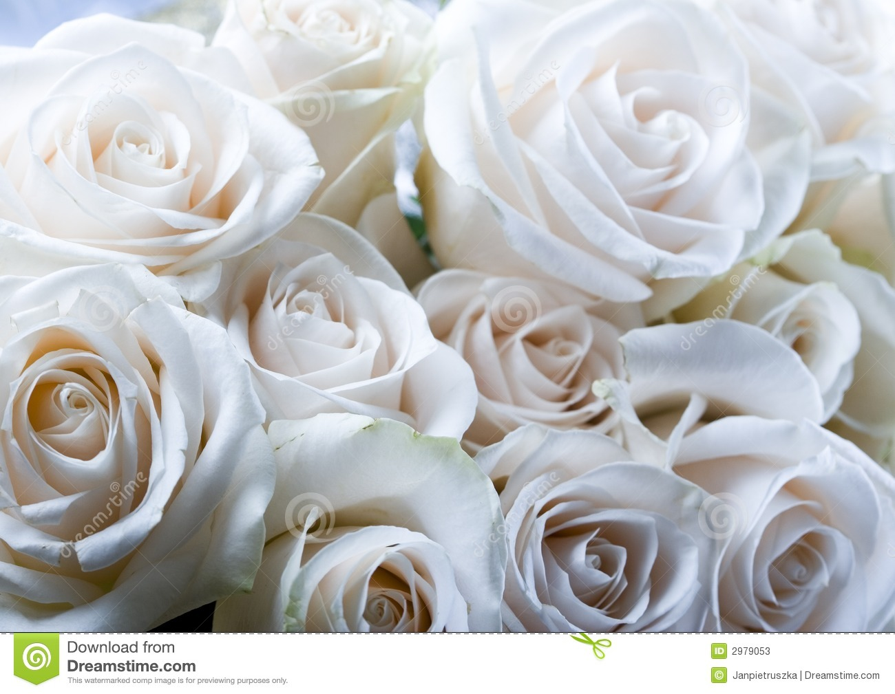 Romantic Flowers Stock Photos Image 2979053
