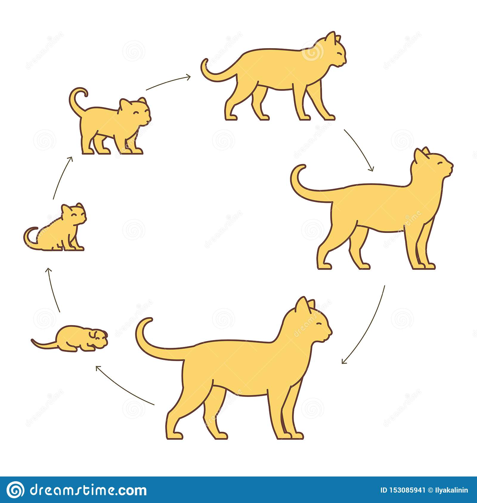 Round Stages Of Cat Growth Set From Kitten To Adult Cat