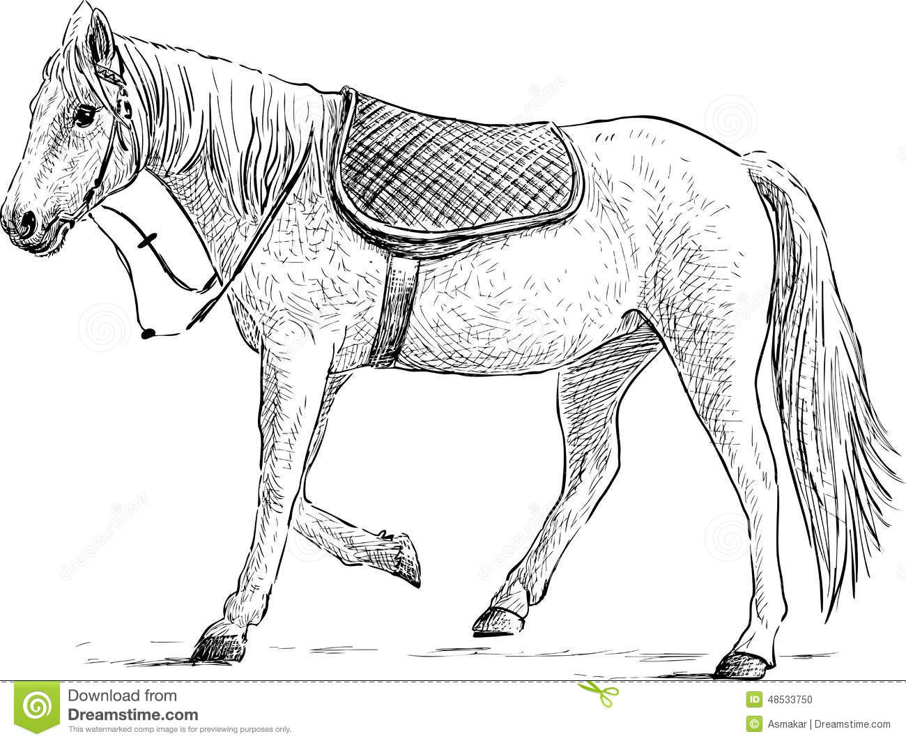Saddled Horse Stock Vector Illustration Of Stallion