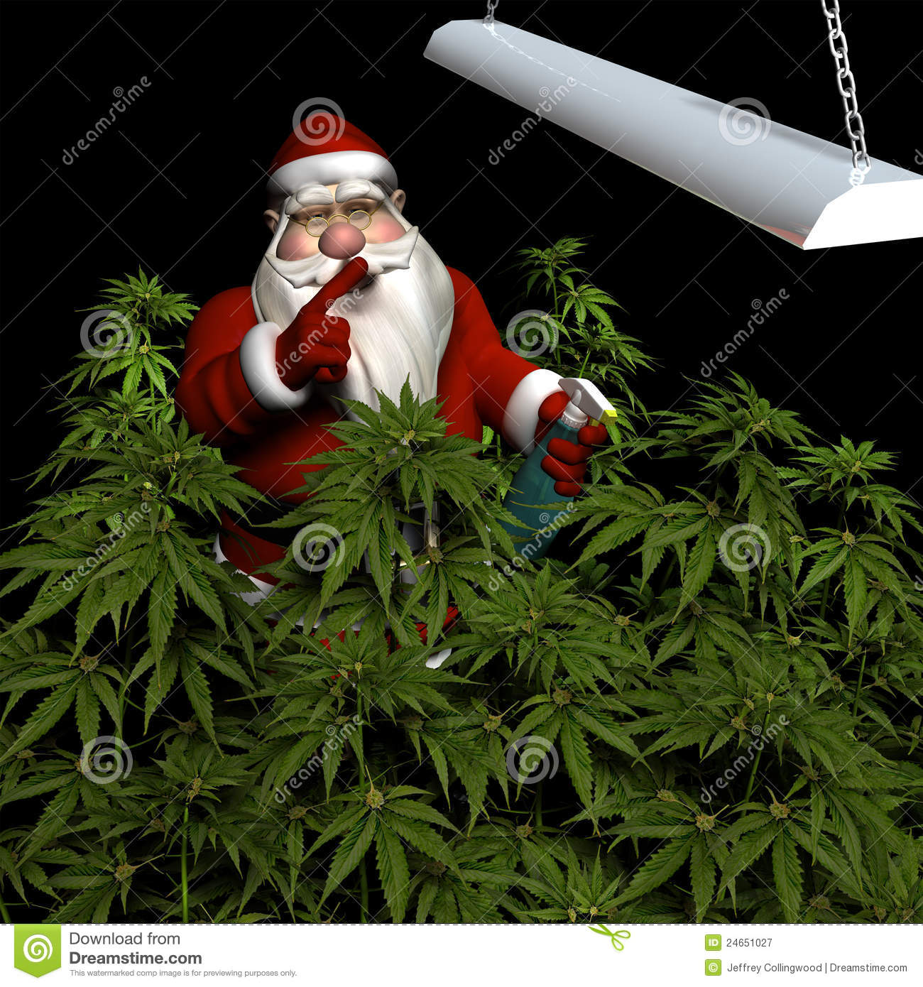 Santa Watering His Crop Of Marijuana Royalty Free Stock