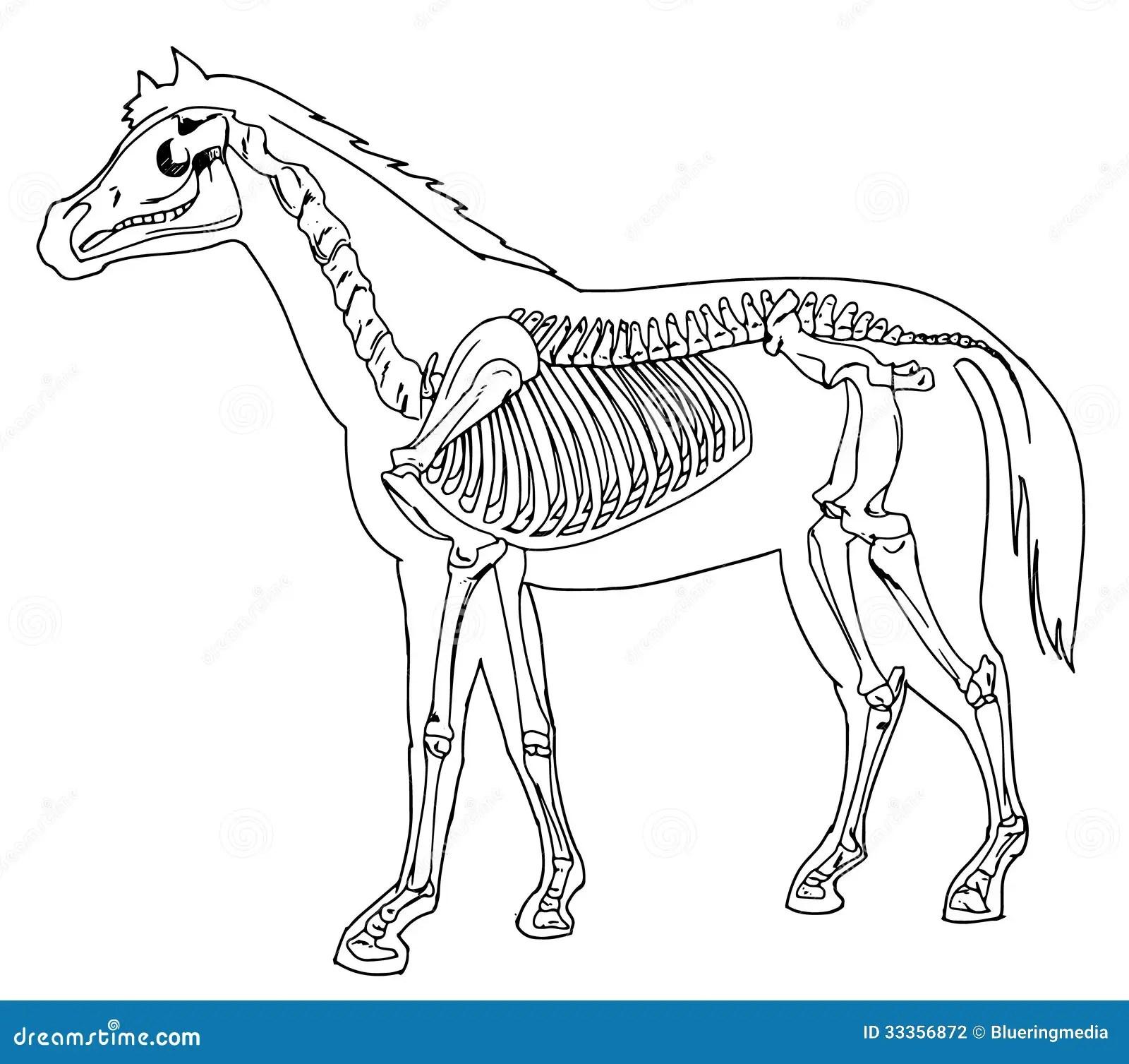 Scheletro Del Cavallo Illustrazione Di Stock