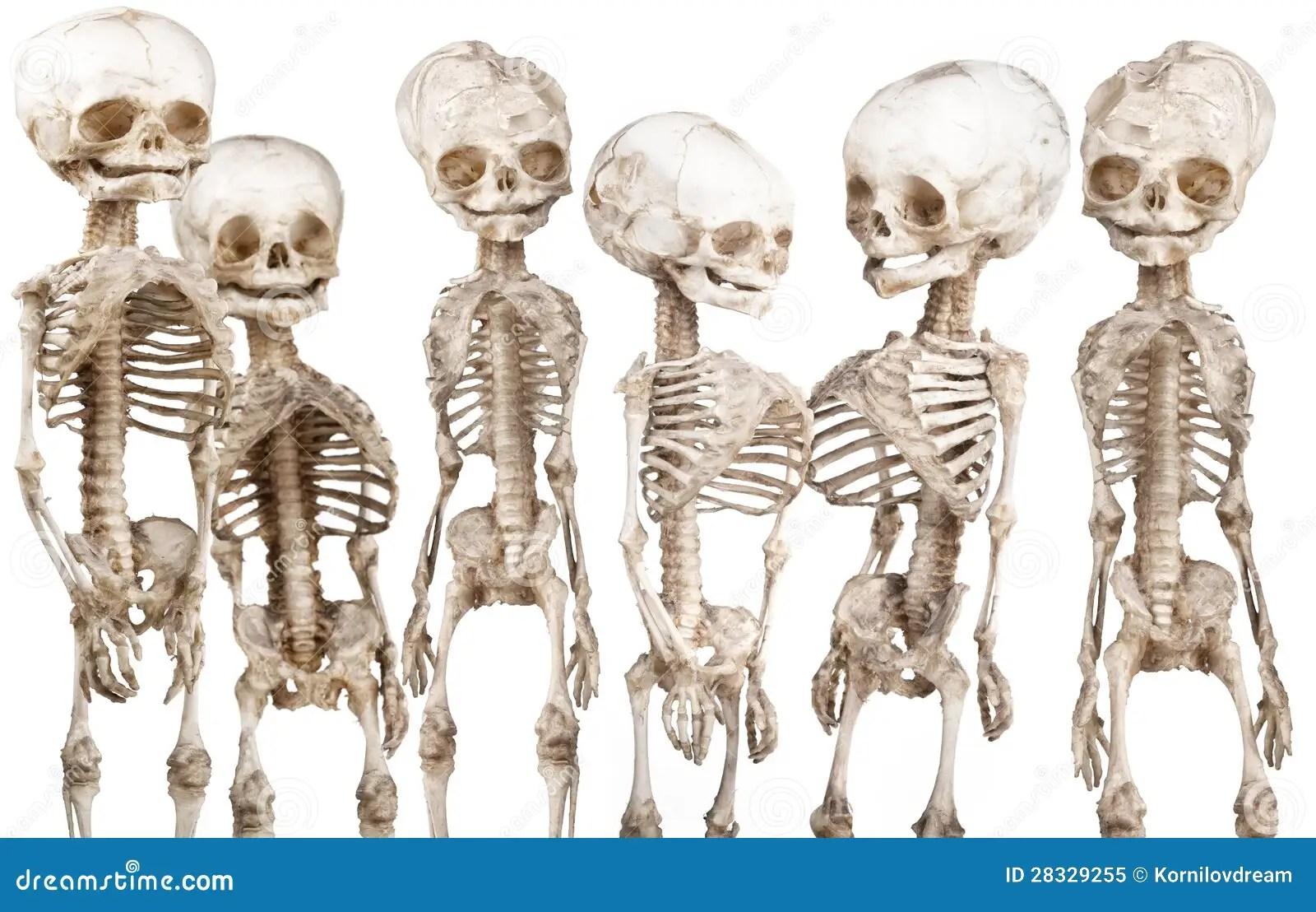 Scheletro Medico Umano Immagine Stock Immagine Di
