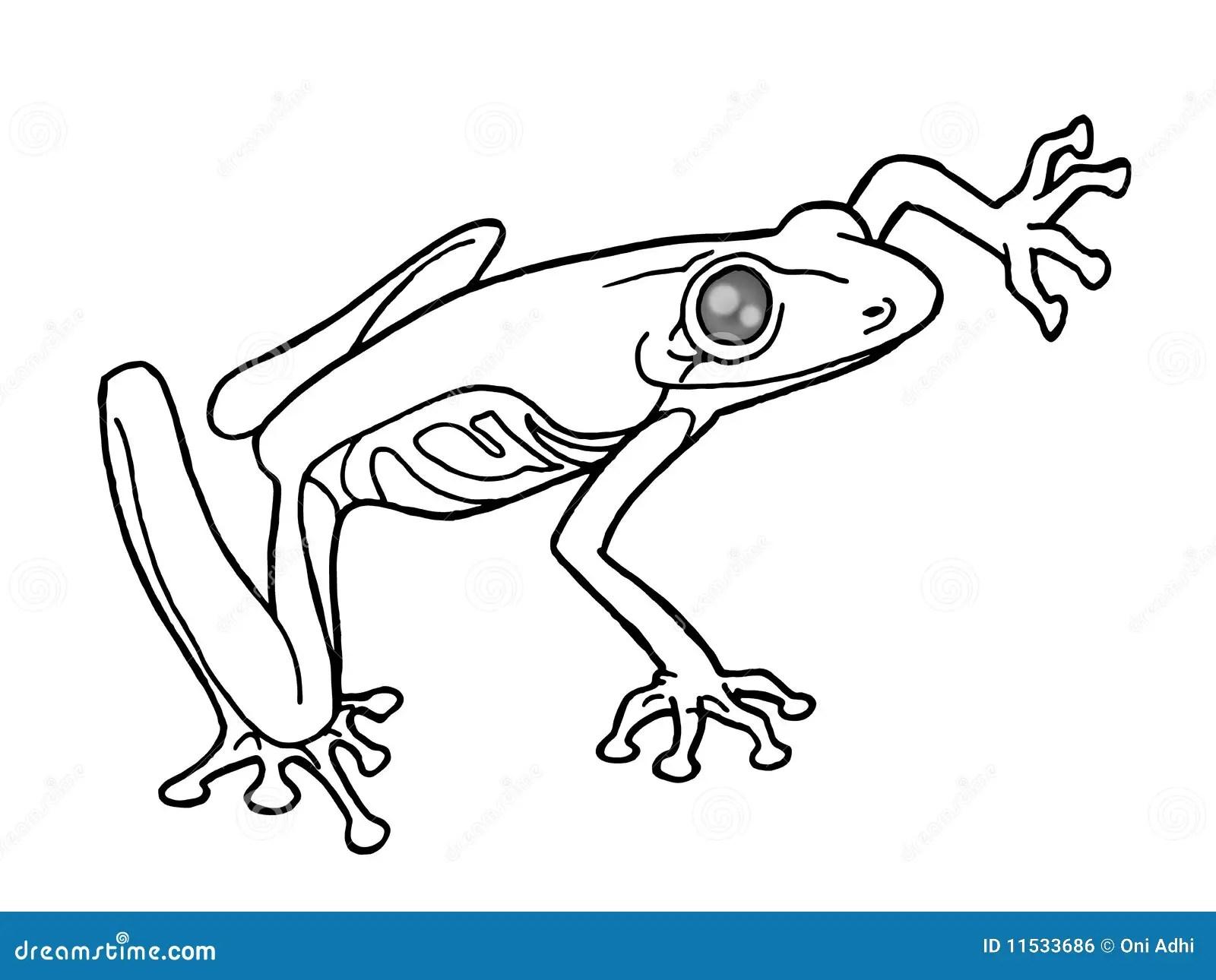 Schwarzweiss Frosch Stock Abbildung Illustration Von