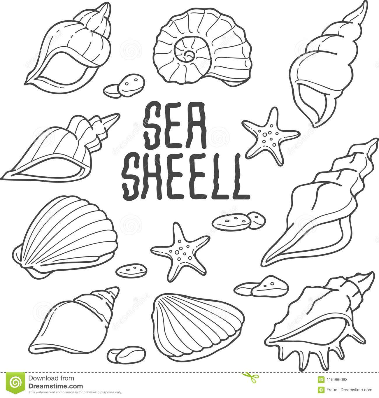 Sea Shell Vector Illustration Stock Vector