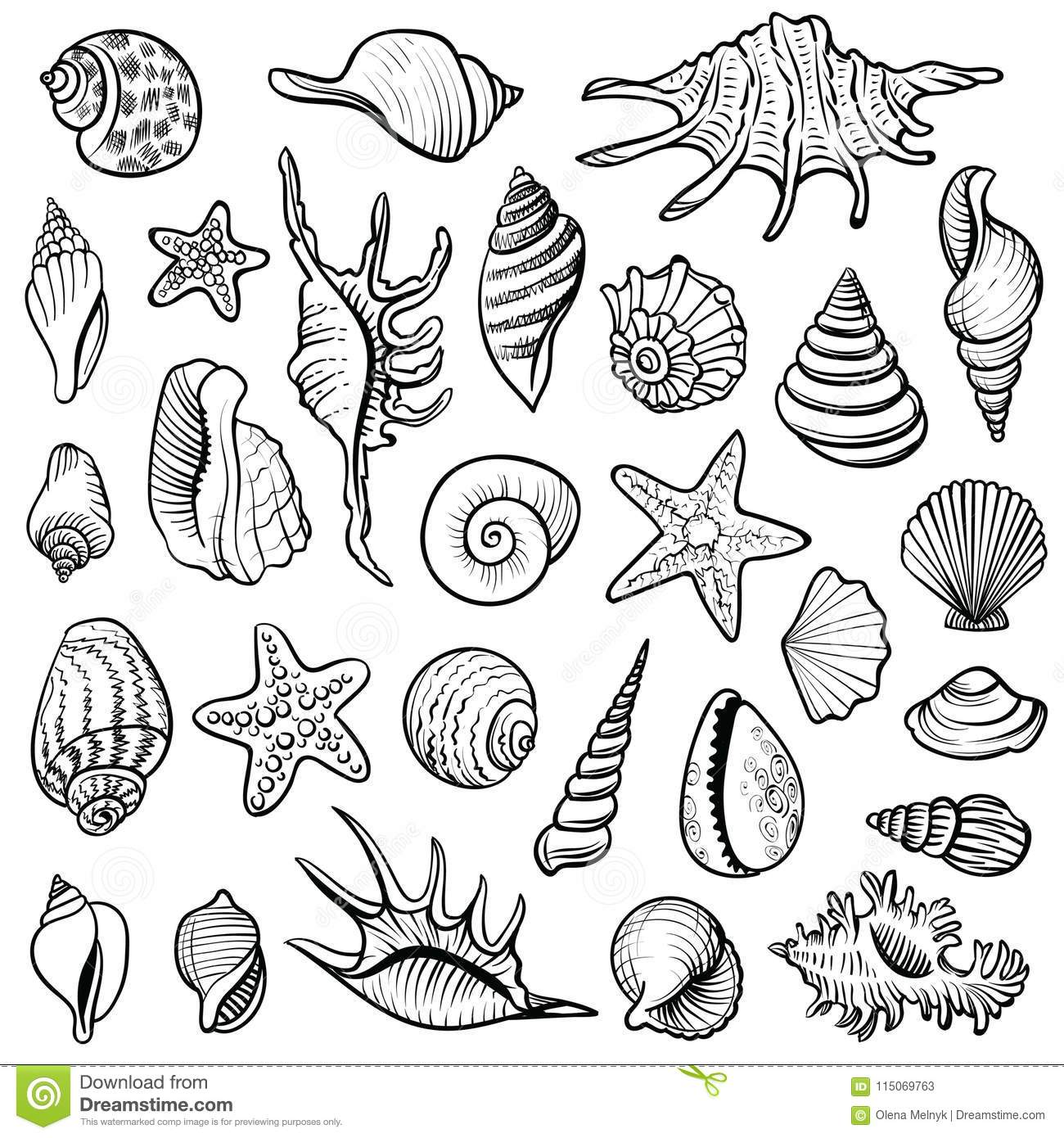 Sea Shells Vector Line Set Black And White Doodle