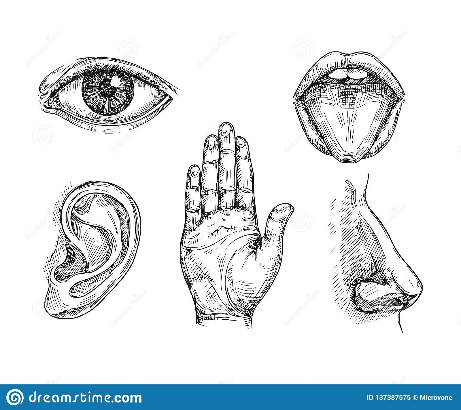 Sense Organs Hand Drawn Mouth And Tongue Eye Nose Ear