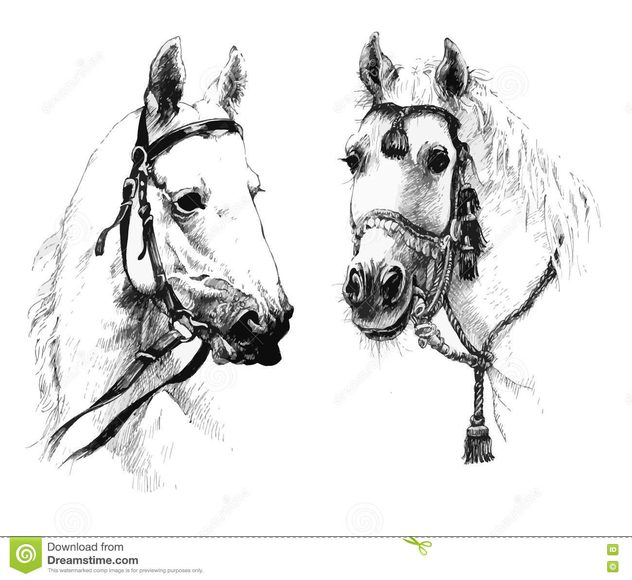 Set Of Black And White Hand Drawn Horses Heads Stock