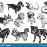 Set Of Cute Puppies Hand Made Black And White Drawing Of Dogs Stock Vector Illustration Of Breeding Asleep 147464737
