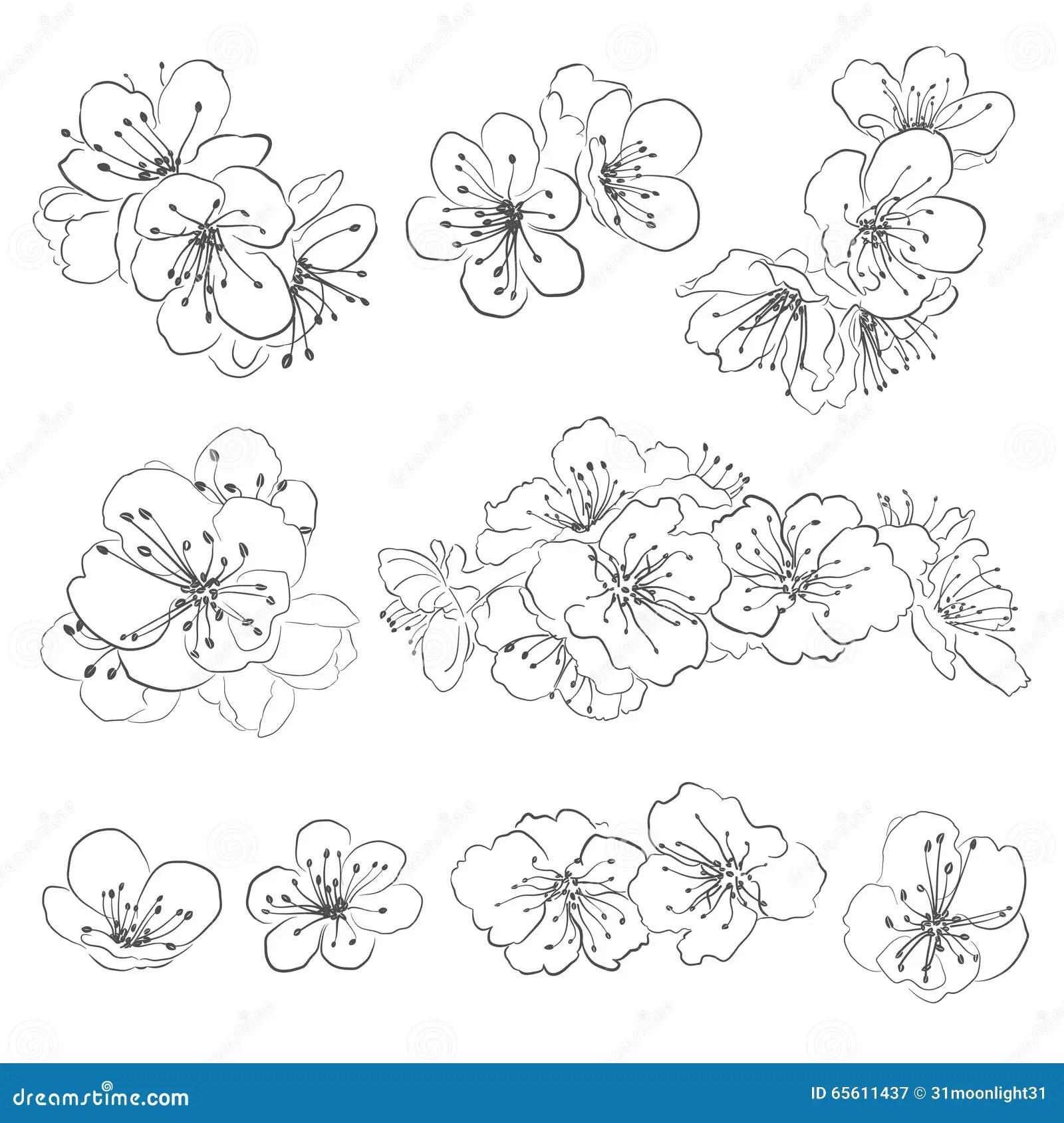 Coloriage Fleur De Cerisier