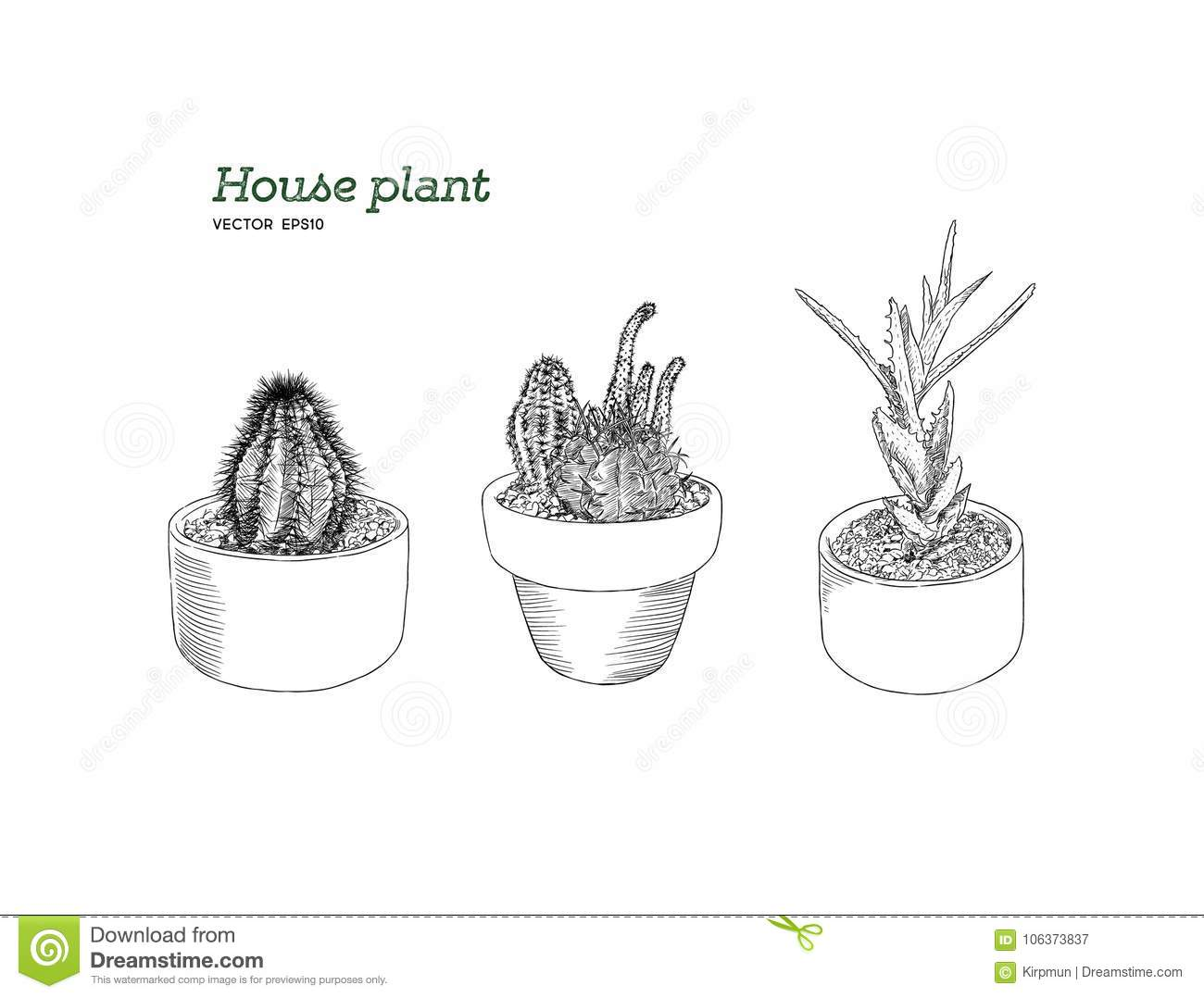 Cute Cactus Cartoon | Wiring Diagram Database