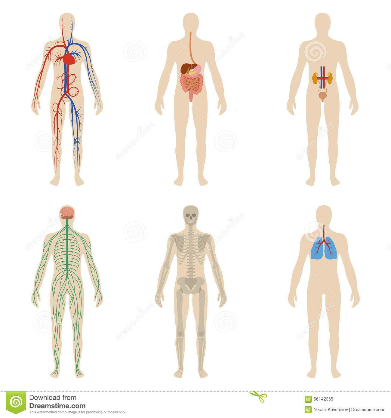 Set Human Organs And Systems Of The Body Vitality Stock
